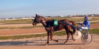 Carreras cavalls Torre del Ram 19-03-17