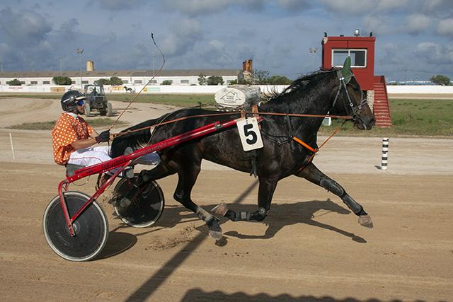 Carreras caballos_mao
