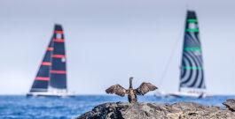 La falta de viento cancela la segunda jornada de Menorca 52 SUPER SERIES Sailing Week