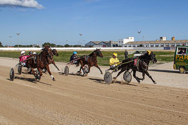 Carreras caballos mao 29-12-19 -Dior, Elliemay i Bella de Magia