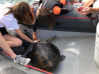 Salvament Tortuga- Es Nàutic