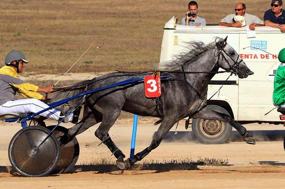 Carrera caballos Torre del Ram2
