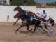Carreras Trot Ciuta 20-08-21